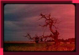 arbre3couchdesoleil2.jpg